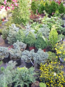 Amenajari gradini Cluj-garden center