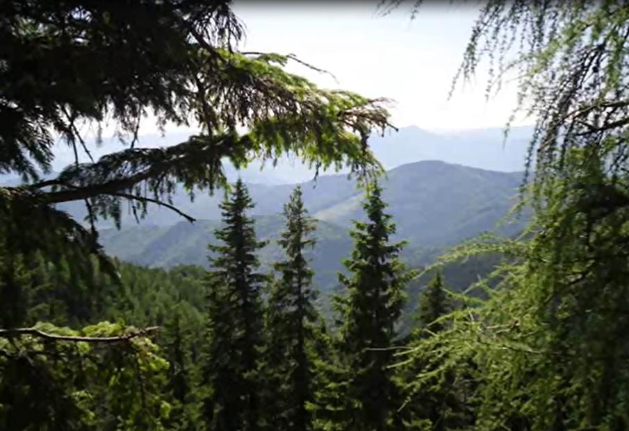 amenajari gradini -muntii Ceahlau 3